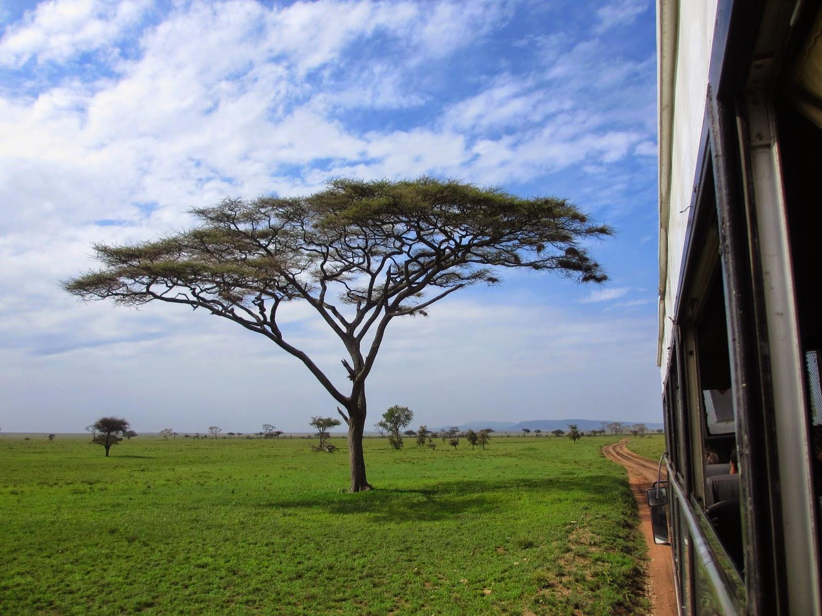Fazer um SAFARI NO SERENGETI e explorar os animais e o bioma de savana | Tanzânia