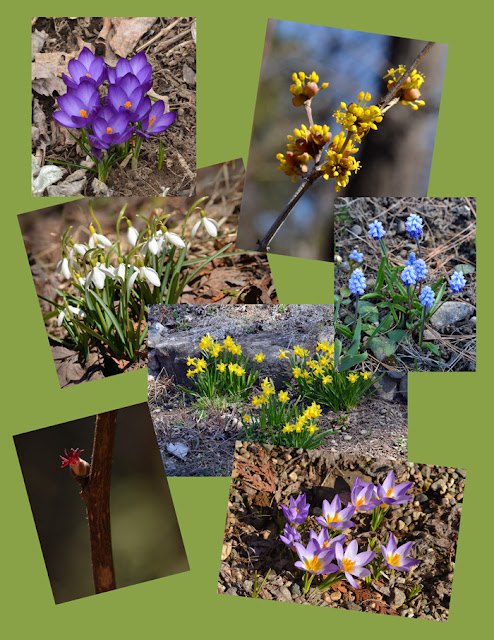 collage of spring bulbs