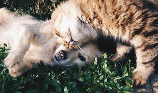 Katzen und Hunde können auch sehr gute Freunde sein.