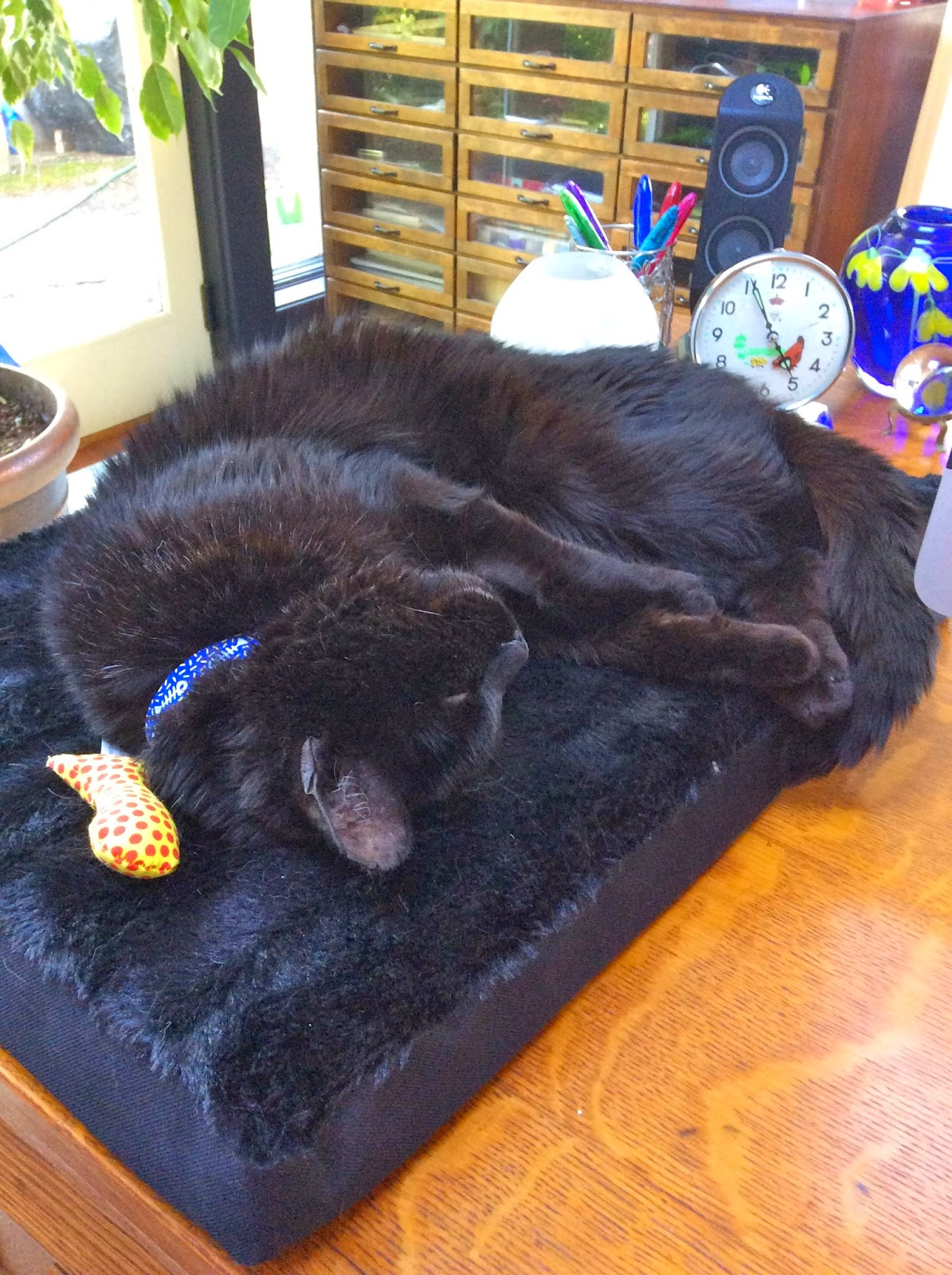 Troy the cat sleeping on his bed