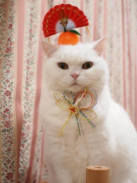 Màn chúc mừng năm mới ngộ nghĩnh và đáng yêu của thú cưng Nhật Bản