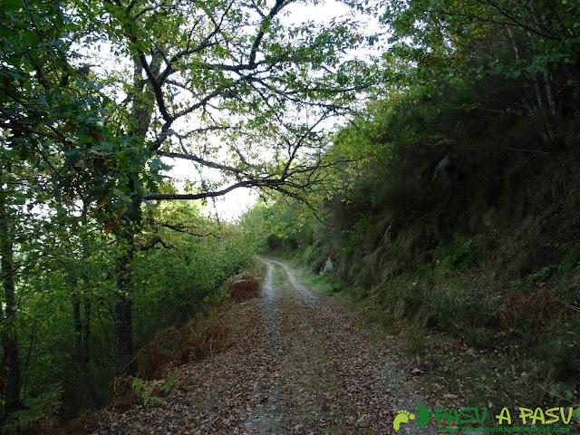 Ruta Pomar de las Montañas: Bosque occidental.