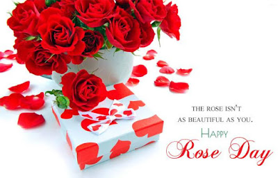 rose images for whatsapp profile