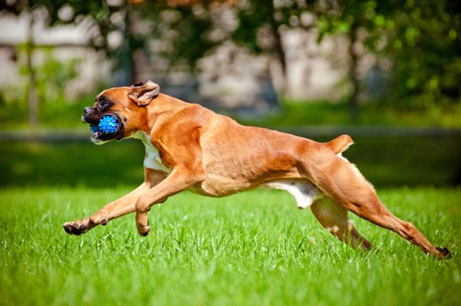 Choroby stawów u psów