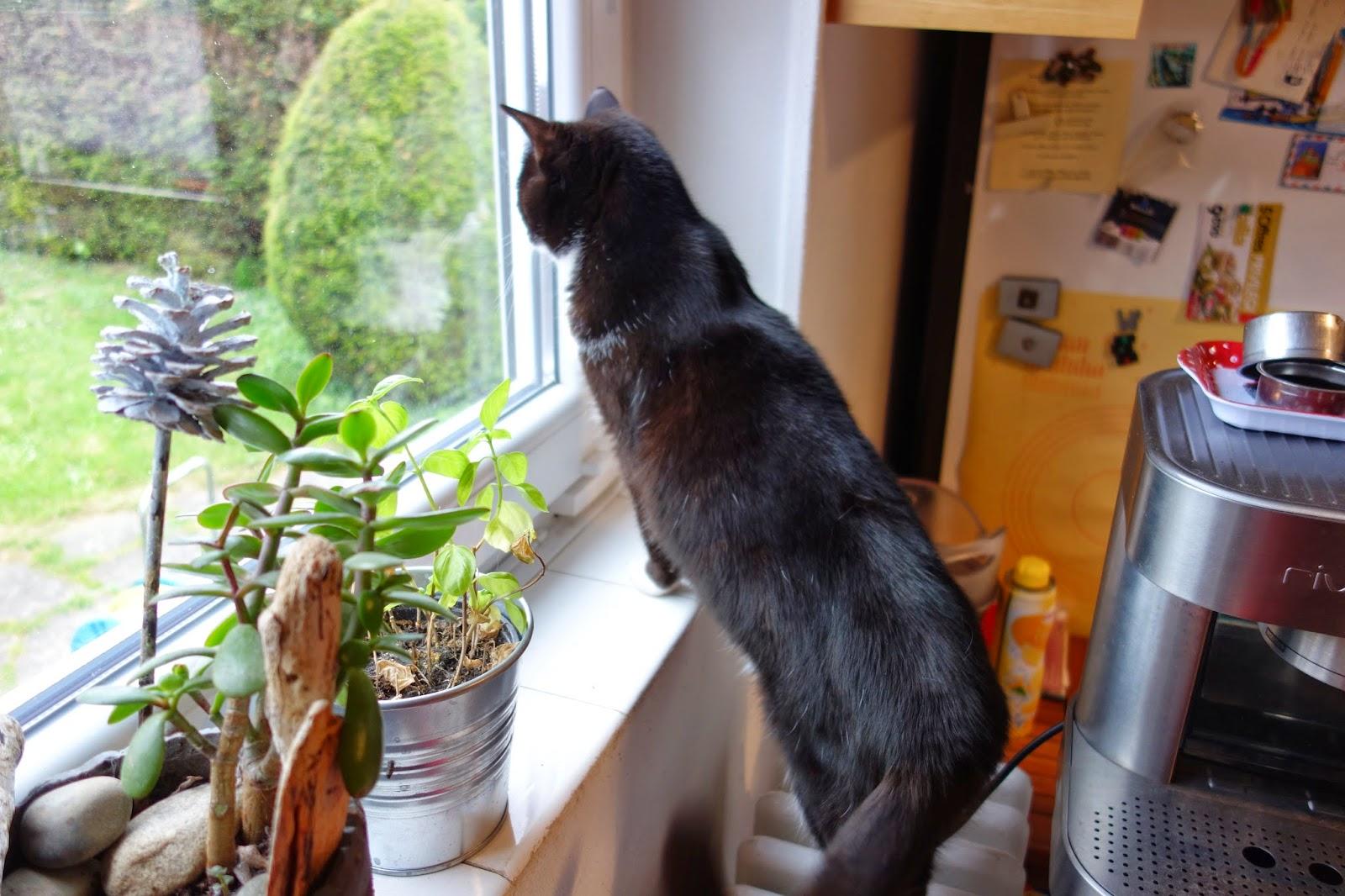 Фримусс наблюдает за садом