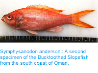 http://sciencythoughts.blogspot.co.uk/2015/10/symphysanodon-andersoni-second-specimen.html