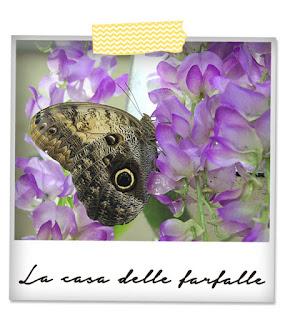 la casa delle farfalle modica ragusa ME creativeinside