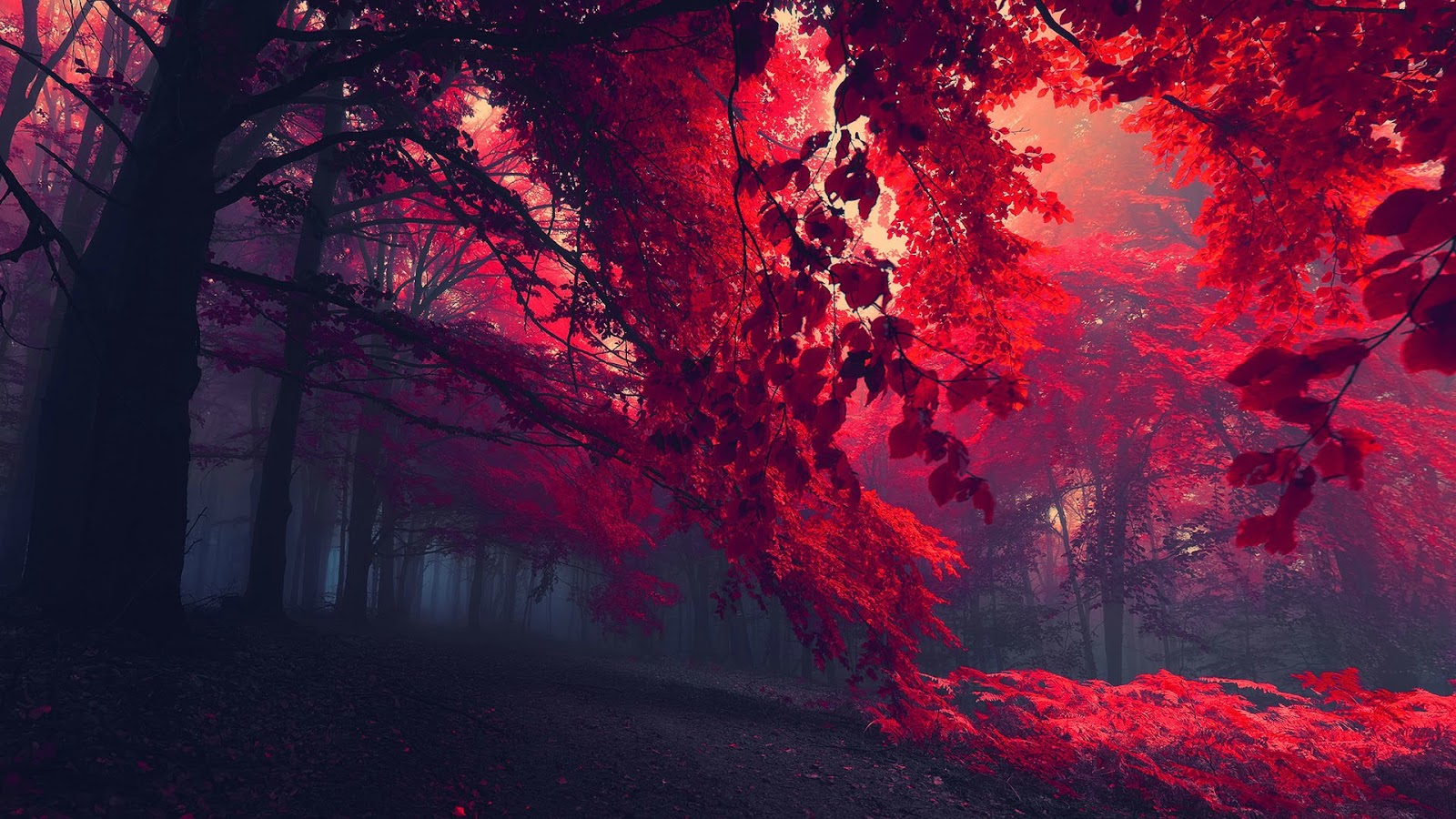 Colorful Trees Wallpapers