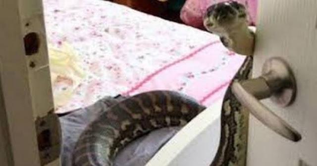 تحذير خطير: اذا وجدت هذا الثعبان في منزلك انتظر ولا تقتله اليكم ما يجب أن تفلعه قبل قتله