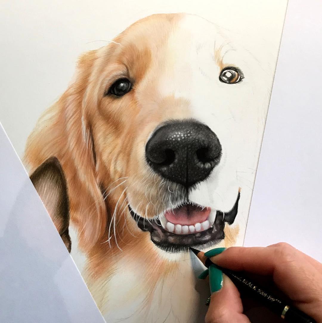 05-Work-in-progress-Kelly-Lahar-Realism-with-Animal-Portrait-Drawings-www-designstack-co
