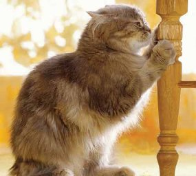 How To Stop A Cat From Scratching Furniture Fun Animals
