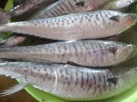 jenis ikan air laut