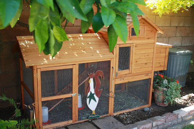 small coop for backyard