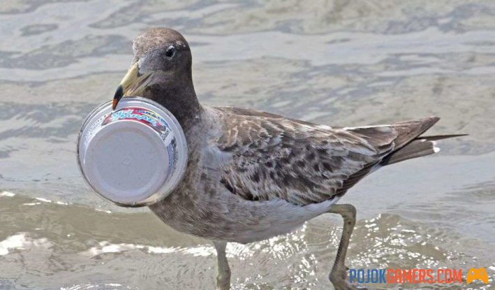 Why do seabirds continue to eat plastic that kills them?
