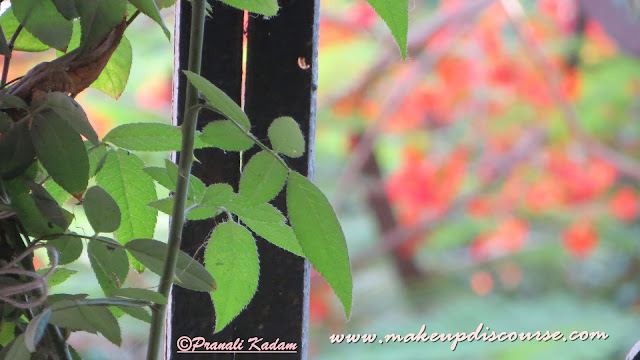 Bokeh Photography with Compact cameras Canon ixus 510hs