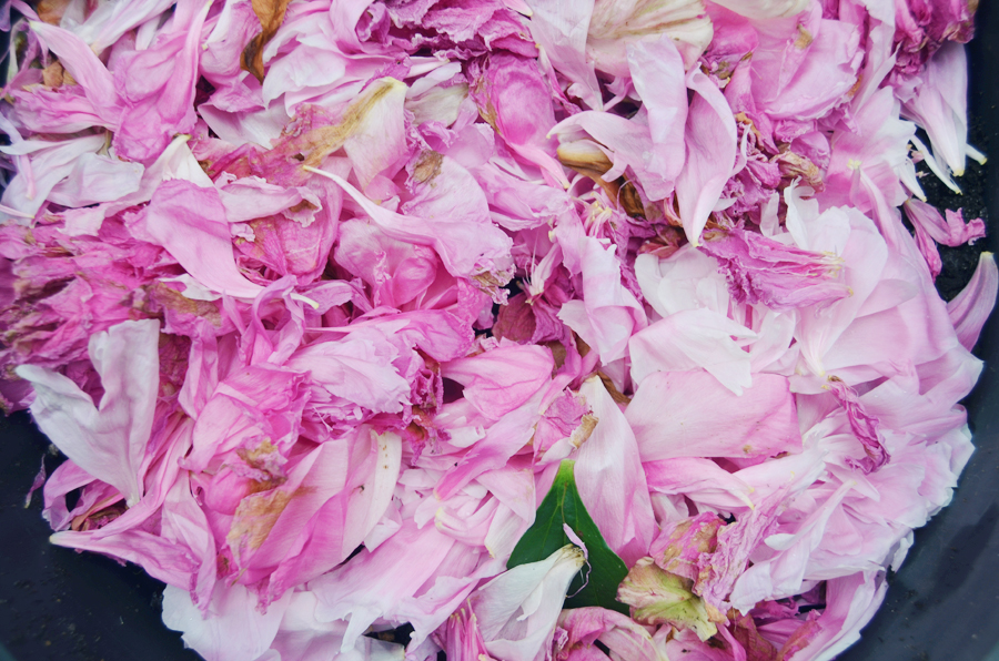 Peony Mulch by Amy Renea, Author of Crafting With Nature and A Nest for All Seasons