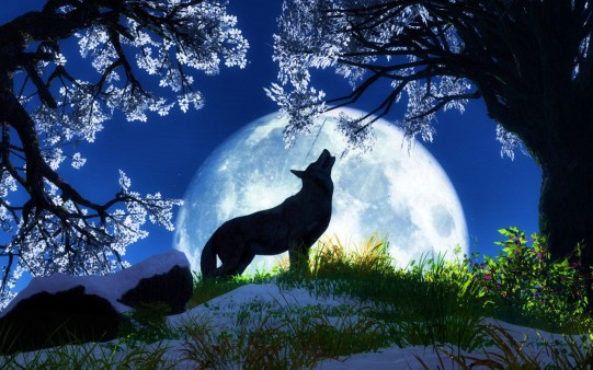 Wolf Wallpaper Very Great Pets Cute And Docile