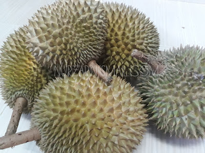 Tips Memilih Buah Durian yang Elok dan Matang