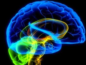 Aumentar sanguínea para el la circulación cerebro en ejercicio