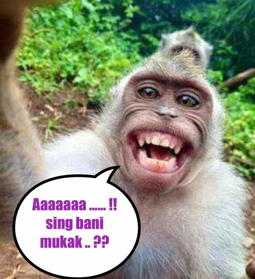 Kumpulan Meme untuk Perang Gambar Berbahasa Bali   File Download  IPutuDirga Blog\u2122