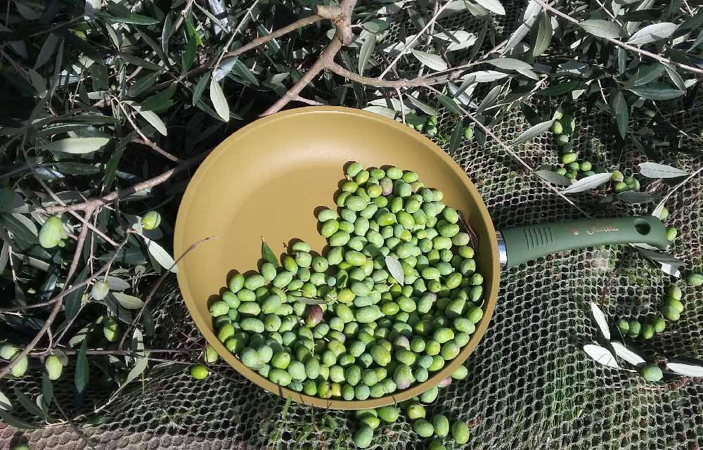 Olivilla di Illa spa
