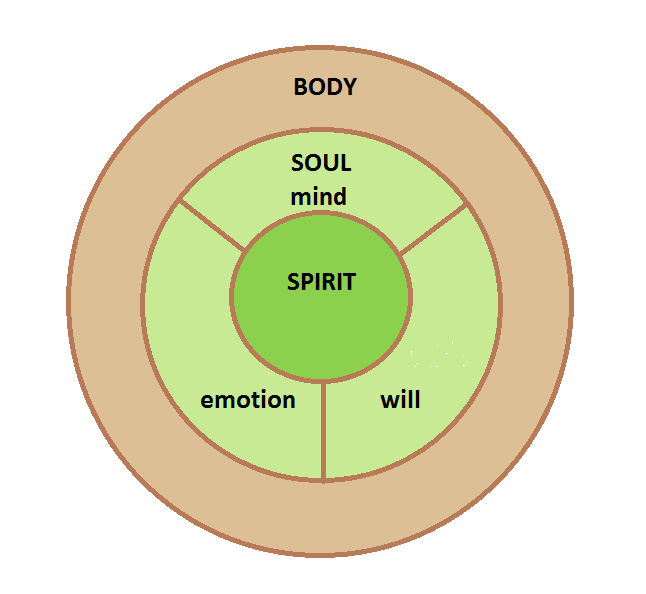 difference between mind and body The mind is our consciousness an energy regulator interacting with the brain generating cognition, the body is the physical brain and body the consciousness interacts with and is emergent from every cell in the body.