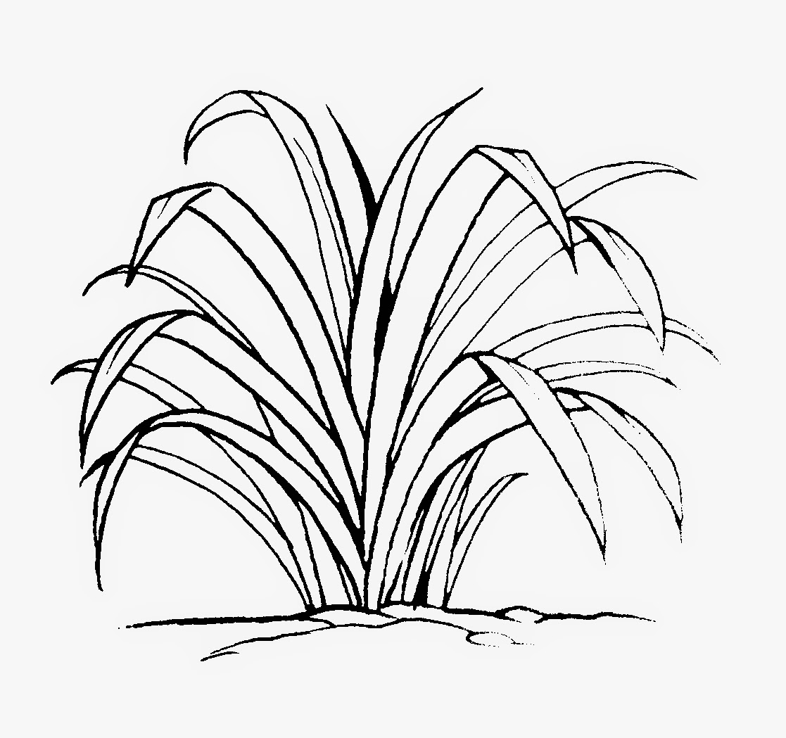 Gambar Mewarnai Rumput Dan Bunga
