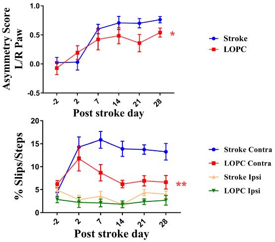 図:低酸素療法の脳保護効果