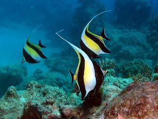 Coral reef fish 13