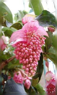 Flores rosas en racimo fondos wallpaper para teléfono móvil resolución 480x800