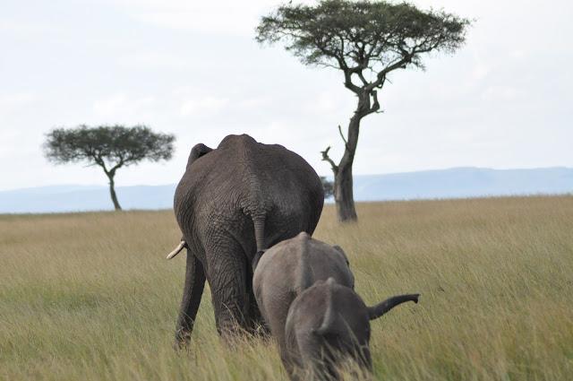 elephant-bums