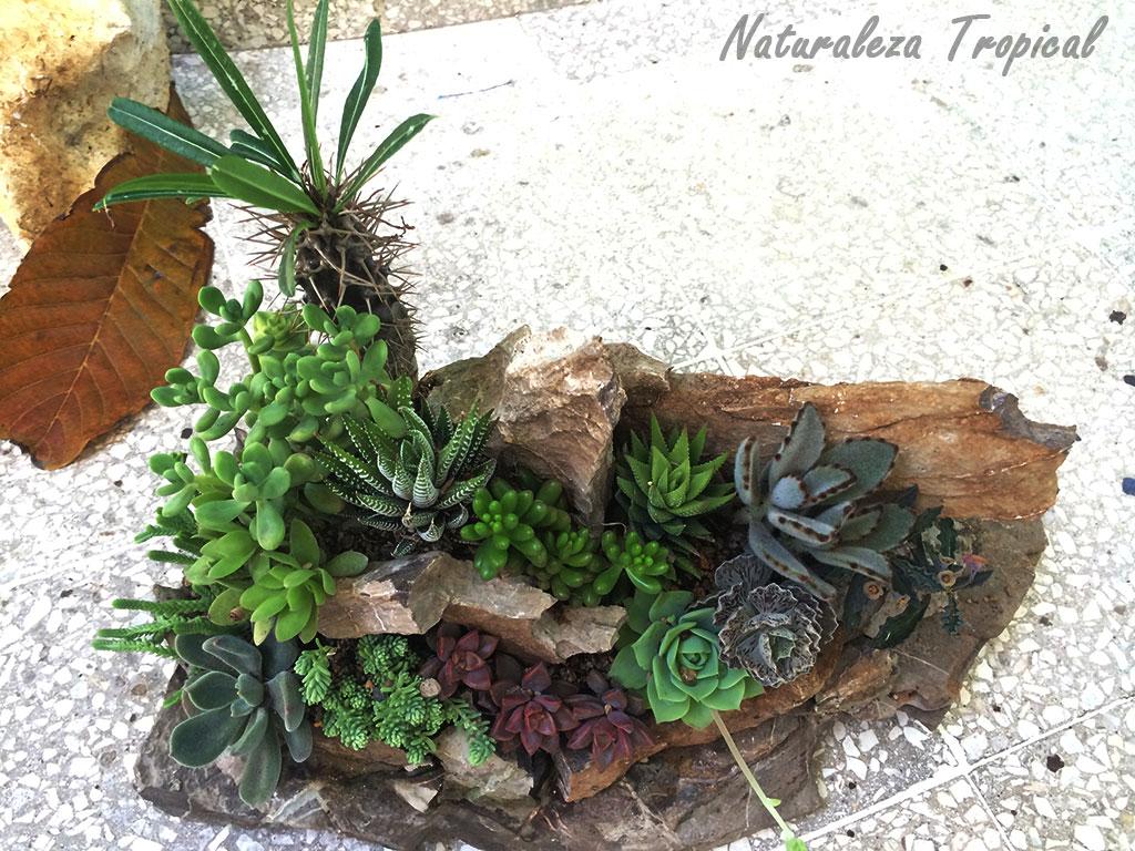 naturaleza tropical crea tu propio desierto para decorar