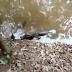¿Qué Pasa Cuando Un Caimán Es Mordido Por Una Anguila Eléctrica?
