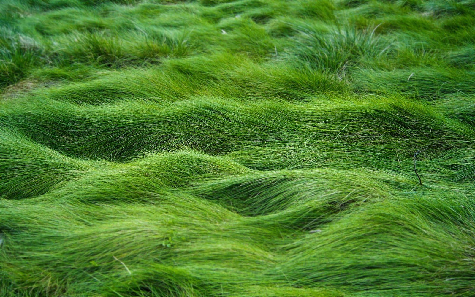 Cell Phone Wallpapers: HD Wallpapers of sea grass