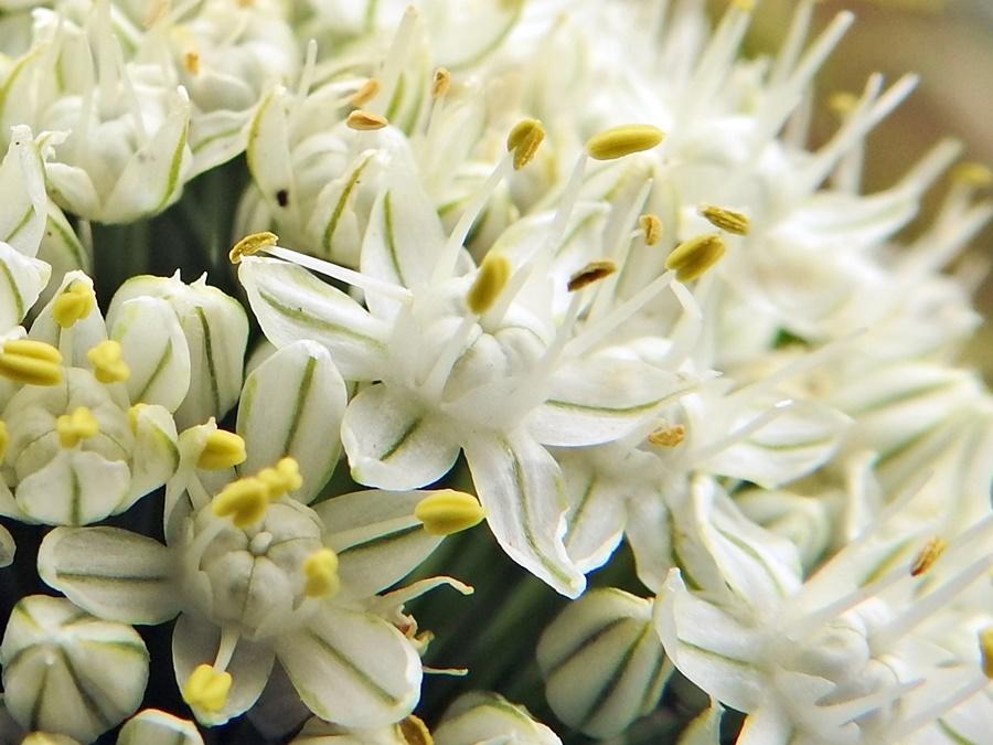 Garden Macro Photo