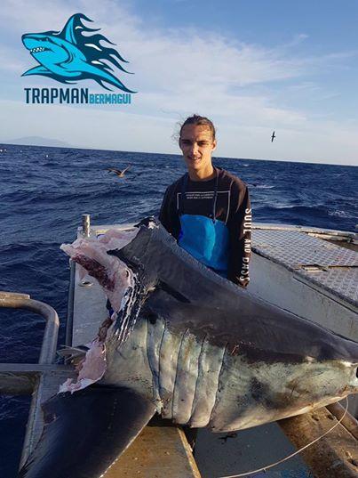 акула - мако невероятных размеров
