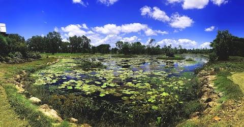 Australia: uwaga krokodyl! Gdzie bezpiecznie pływać?