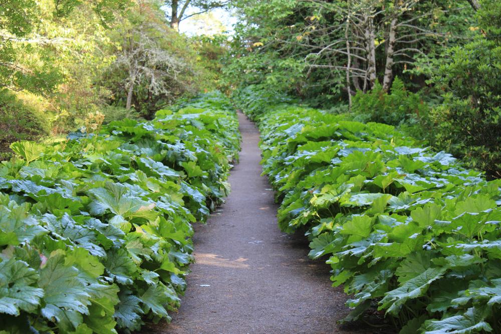 Visite De Jardin Inverewe Garden Ecosse