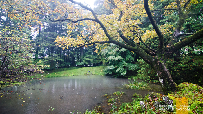 Nikko Autumn Rain