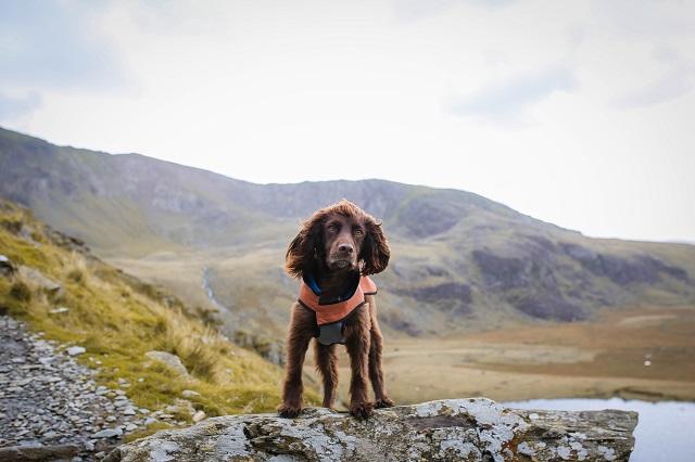 Climbing Snowdon with a Dog
