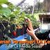 Benarkah Strawberry Hidup Subur Di Kedah?