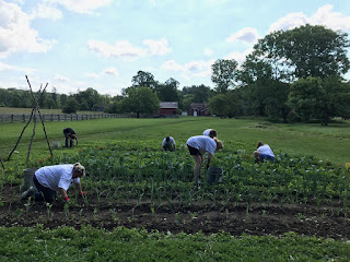 Americhem Employees volunteer and Hale Farm & Village as part of United Way of Summit County's Day of Action. | June 21, 2017