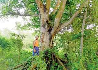 forest man jadav payeng