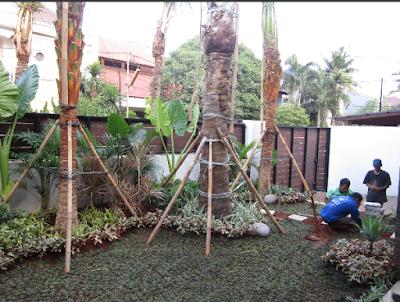 Taman Modern Minimalis - Tukang Taman Surabaya I