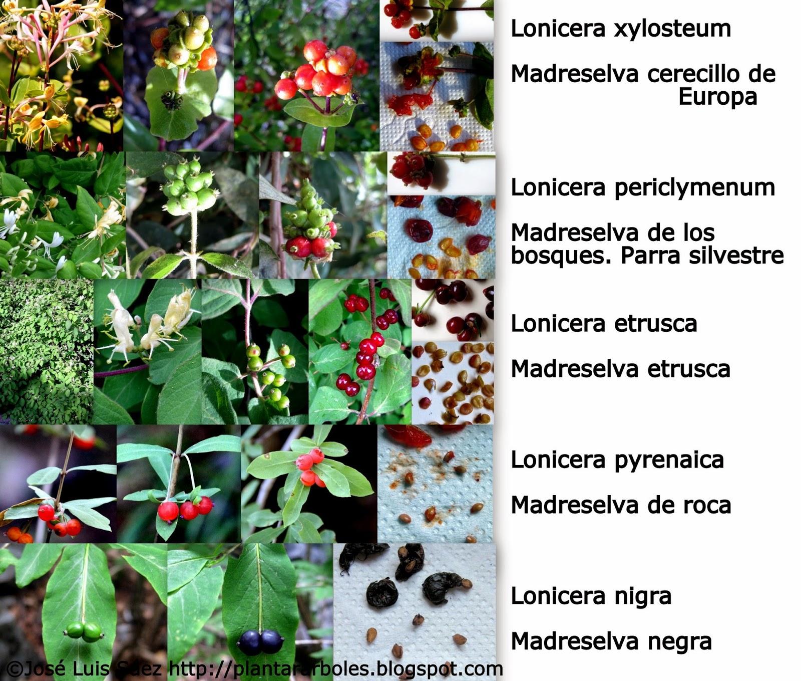 PLANTAR RBOLES y arbustos Tipos de frutos y semillas AUTCTONOS