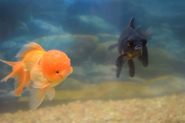 What Are My Fish Up to When We're on Vacation?  via  www.productreviewmom.com