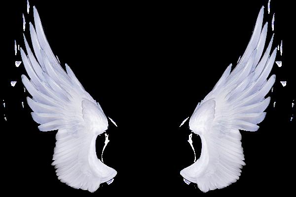 Alitas blancas y - 4 9