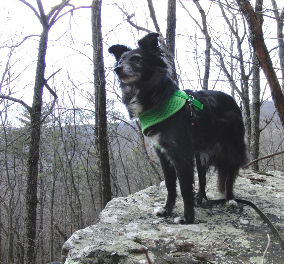 Dog Friendly Hikes Near Blacksburg Va