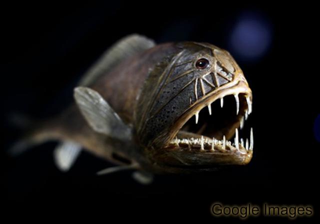 10 Ikan Dasar Laut Terdalam || Deep Sea Fish