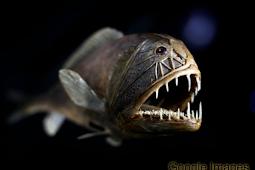 10 Ikan Dasar Laut Terdalam atau Deep Sea Fish